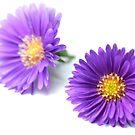 Purple Flowers by snehit