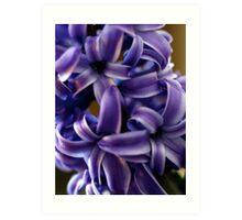 Purple Hyacinth Macro Art Print