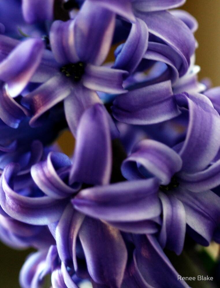 Purple Hyacinth Macro by Renee Blake
