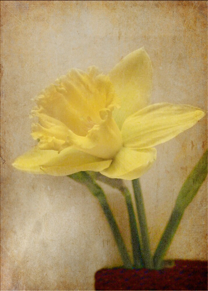 Daffodil for Mother by L J Fraser