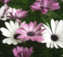 Purple and White Daisies 2 Painterly by Christopher Johnson