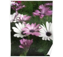 Purple and White Daisies 3 Painterly Poster
