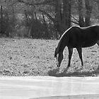 Winter Sun Horses #5 by SomeGuyInNJ