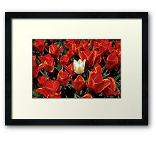 Dare to be different  Framed Print