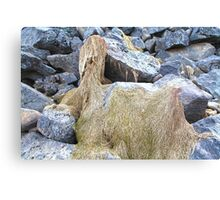 Dried moss Canvas Print