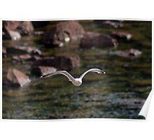 Lake Superior Gull Poster