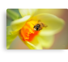 It Just Wouldn't Bee Spring Without ...  Canvas Print