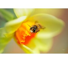 It Just Wouldn't Bee Spring Without ...  Photographic Print
