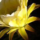 Spring again by Linda Sparks