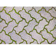 Paving Bricks and Moss Photographic Print