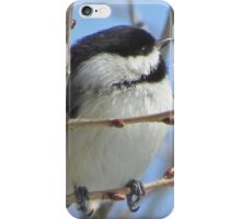 Cute chickadee sits on a branch in early spring iPhone Case/Skin