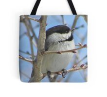 Cute chickadee sits on a branch in early spring Tote Bag