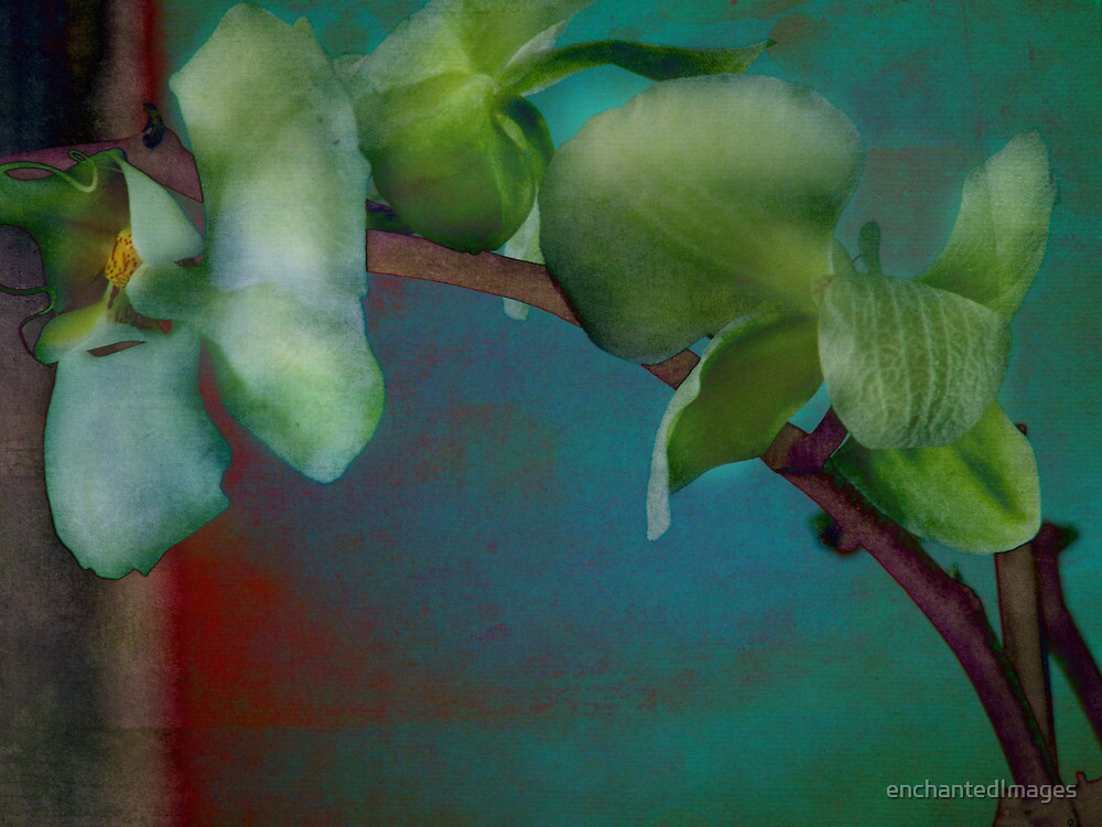 Orchid at the Edge of Night by enchantedImages