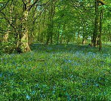 Bluebell Carpet by John Hare