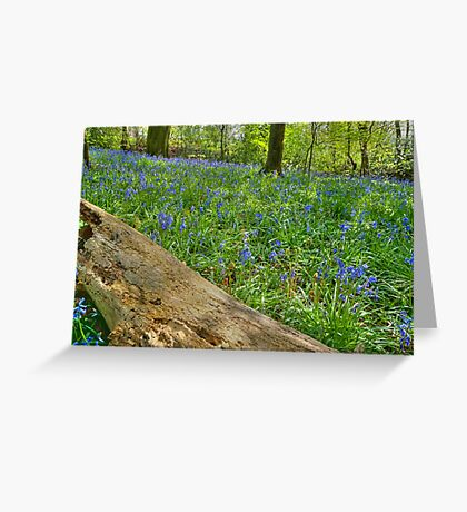 Whalley Wood Bluebells Greeting Card