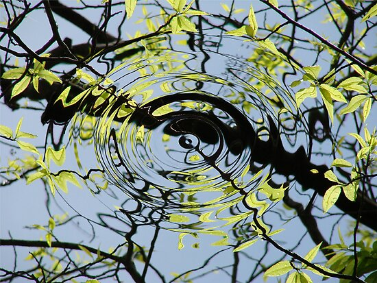 Reflecting on Spring Sourwood and Sky by Jean Gregory  Evans