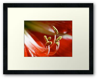 Stamen by Jason Dymock