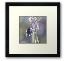 Lavender and Bee..... Framed Print