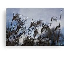 Dark grass seed agains the sky Canvas Print