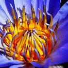 Waterlily by loiteke