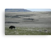 Buffalo Grazing with Horsemen Canvas Print