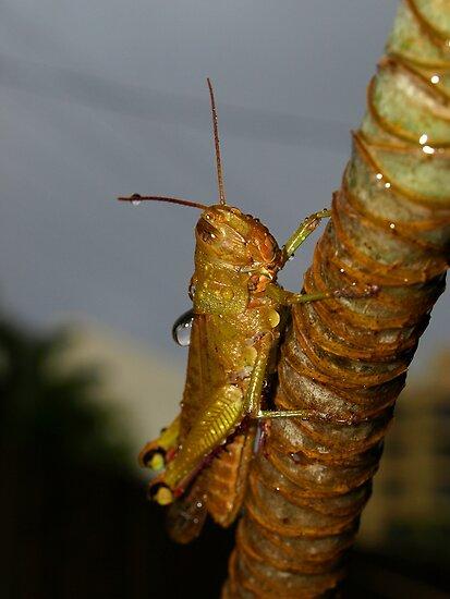 Wet Cricket by Jason Dymock Photography