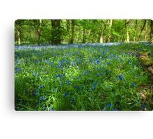 Spring Wood Canvas Print