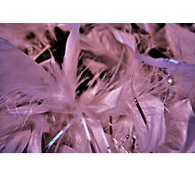 Feather bower Photographic Print