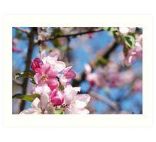 Spring blossoms Art Print