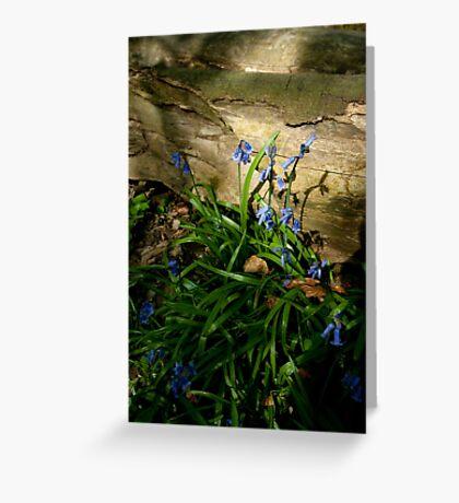 Sunlit Bluebells Greeting Card