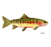 Study of a Greenback Cutthroat Trout Photographic Print