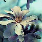 Magnolia's Beauty - A Spring Offering by Evita
