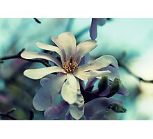 Magnolia's Beauty - A Spring Offering Photographic Print