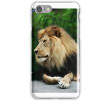 A Lion's Daydream iPhone Case/Skin