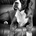Missing you - Boxer Dogs Series by Evita