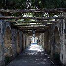 Woodin Walkway at The Alamo by cdarehill