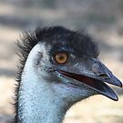 Emu by lutontown