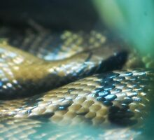 Snakey Scales by MythicFX