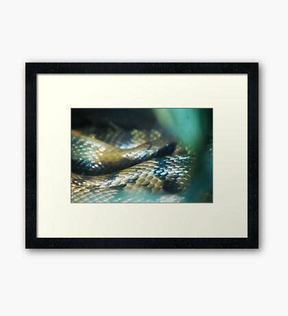 Snakey Scales Framed Print