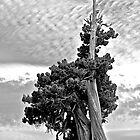Solitary Sentinel in B&amp;W by John Butler