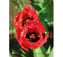 Ladies in Red - Pretty Tulips in Mirrored Frame Photographic Print