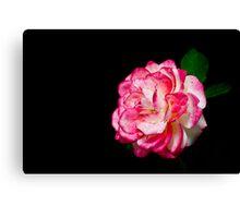 Rose On Black Canvas Print