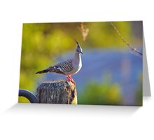 Crested Pigeon On Gate Post To The Back Paddock. Brisbane, Queensland, Australia. Greeting Card
