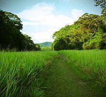 grass runaway by jtminde