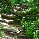 Stairway to Blue Ridge by Glenn Cecero