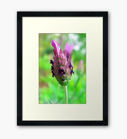My Mystery Flower Framed Print