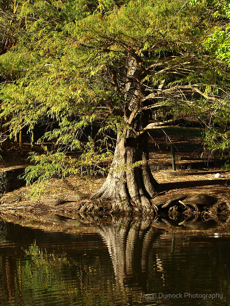 Old Tree by Jason Dymock Photography