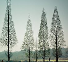 Four Trees by dlwjiang