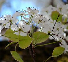 Newness of Spring by vigor