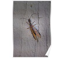 Colorful insect with a tail, on the wall Poster